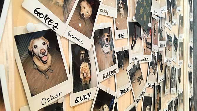Hundebilder