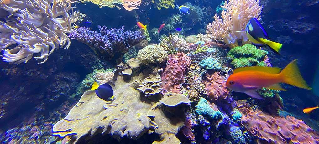 Das Berliner Aquarium am Zoo ist das bunteste Ausflugsziel in Berlin