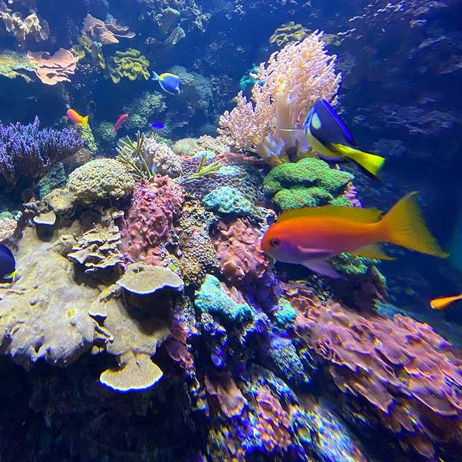 Wo ist Nemo