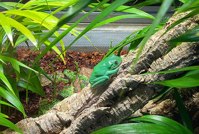 Frosch im Berliner Aquarium