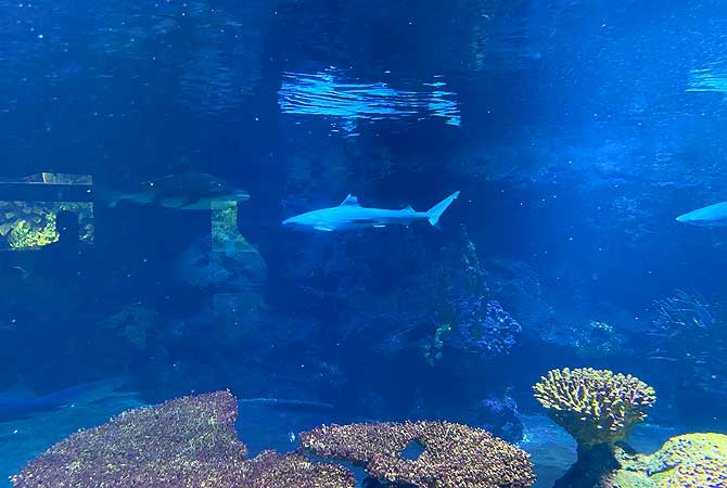 Haibecken im Aquarium Berlin