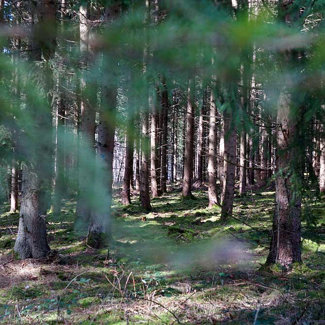 Dichtes Baumwerk auf dem Herzog Jäger Pfad