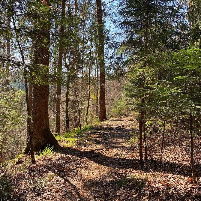 Wanderung um Hohenwart auf Waldwegen