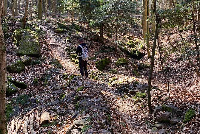 Waldwandern bei Hohenwart in Baden