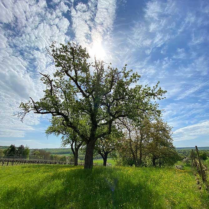 Wanderung zum Derdinger Horn Baumweg
