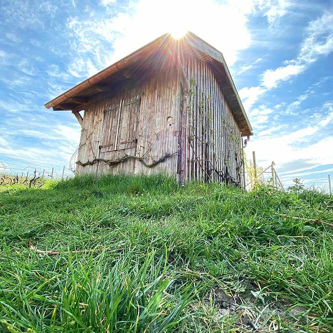 Hütte in den Weinbergen
