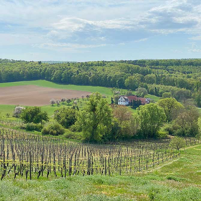 Ausblick auf die Weinberge bei Oberderdingen