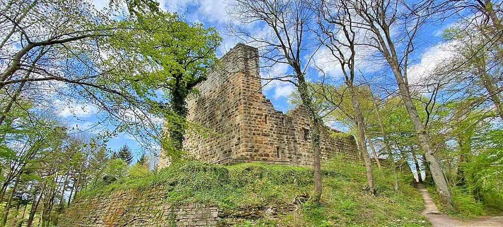 Wanderung zur Burgruine Blankenhorn in Eibensbach bei Güglingen