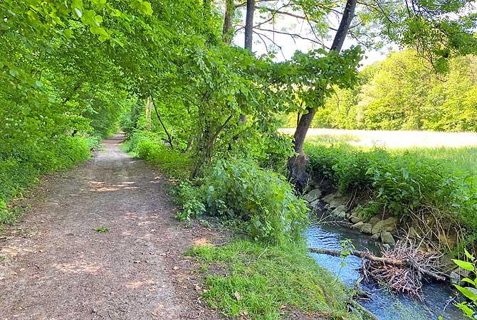 Deine Wanderung durch das Kreuzbachtal führt straight am Kreuzbach entlang