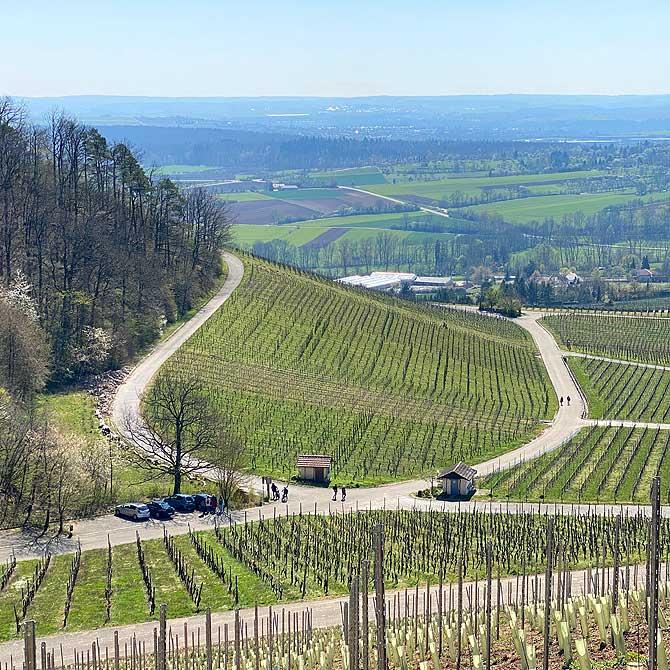 Ausblick auf die Horrheimer Weinberge