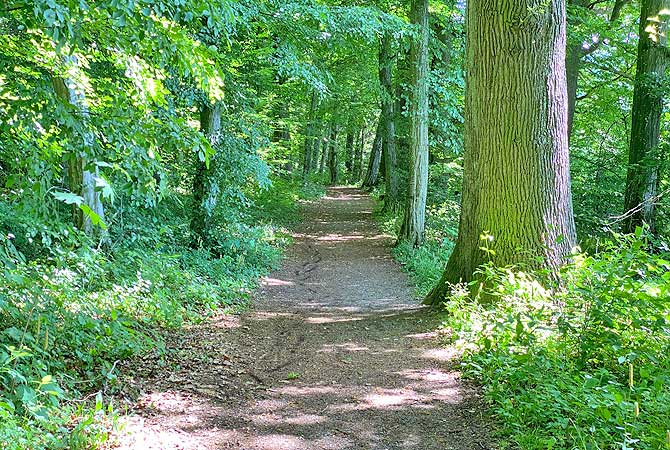 Wald Wanderung bei Steinheim Murr