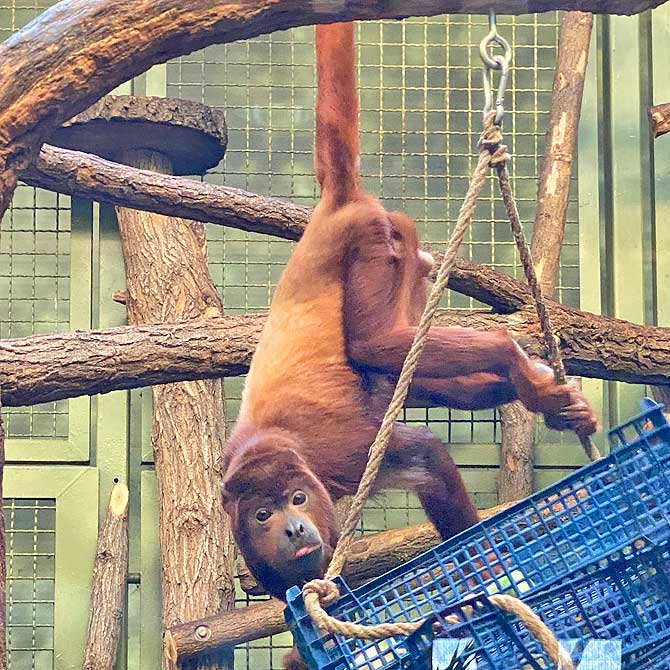 Affenhaus im Tierpark