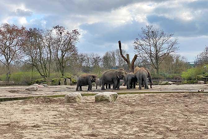 Elefanten drehen ihre Runden