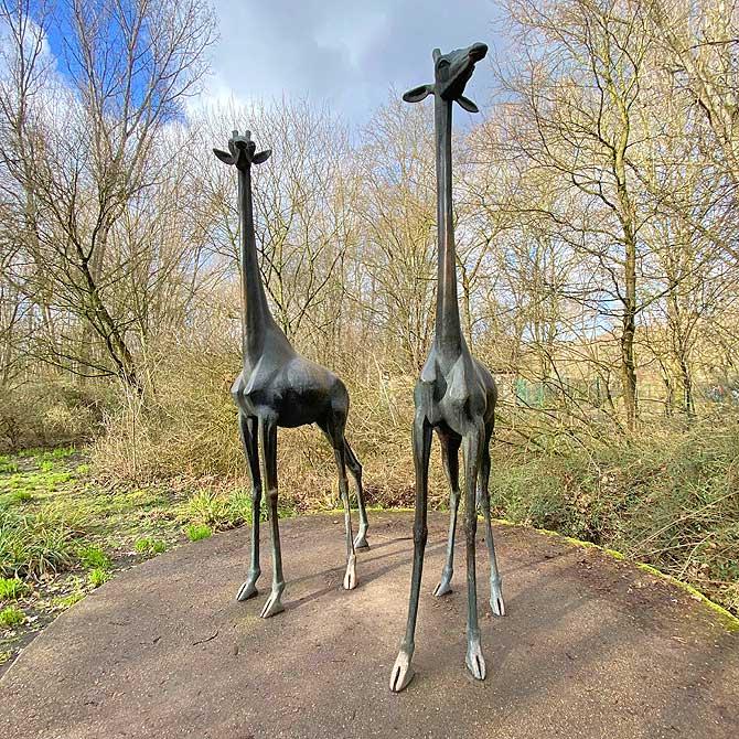 Giraffen wie versteinert