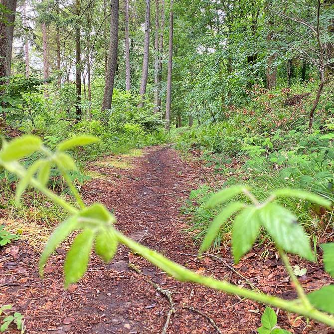 Wanderung auf dem Hunsrückbahn Waldweg