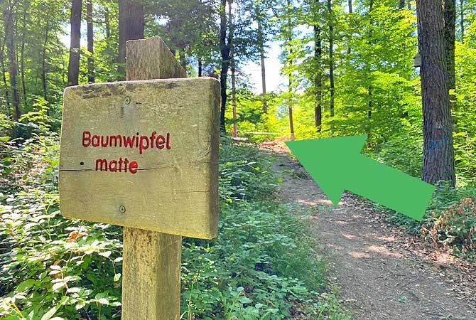Baumwipfelmatte im Schlater Wald