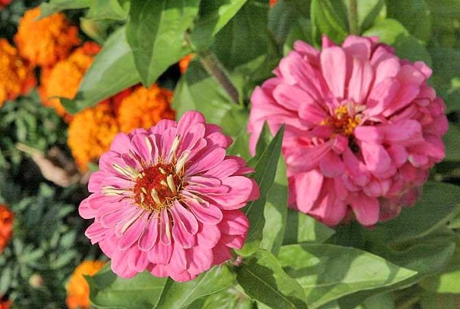 Blume im Hofwiesenpark Gera