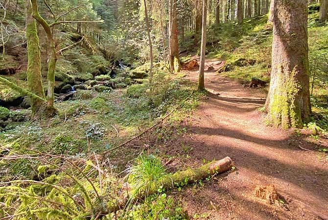 Rötelbachtal auf dem Schwarzwald Genießerpfad