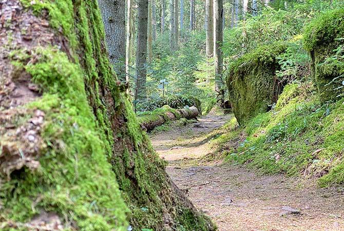 Tolle Wanderung auf dem Schwarzwald Genießerpfad