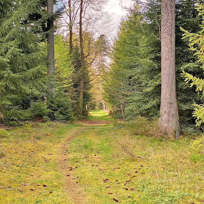 Wald Wasser und Wiesen Pfad