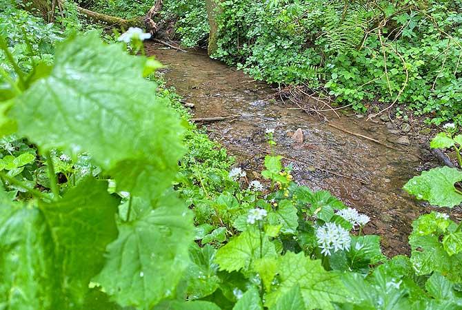 Hier fließt der Glaitenbach