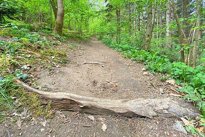 Waldweg am Bach entlang