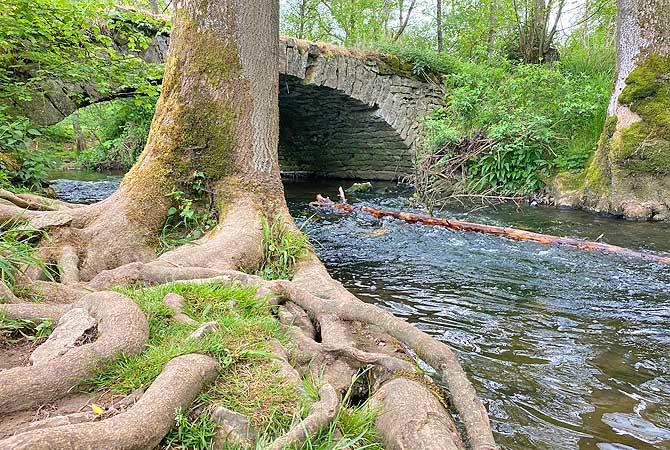 Steinbrücke mit Baumstamm