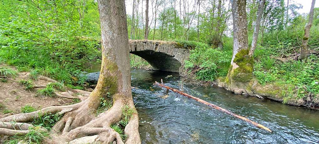 Das Buchenbachtal bei Affalterbach ist ein idyllisches Natur-Ausflugsziel