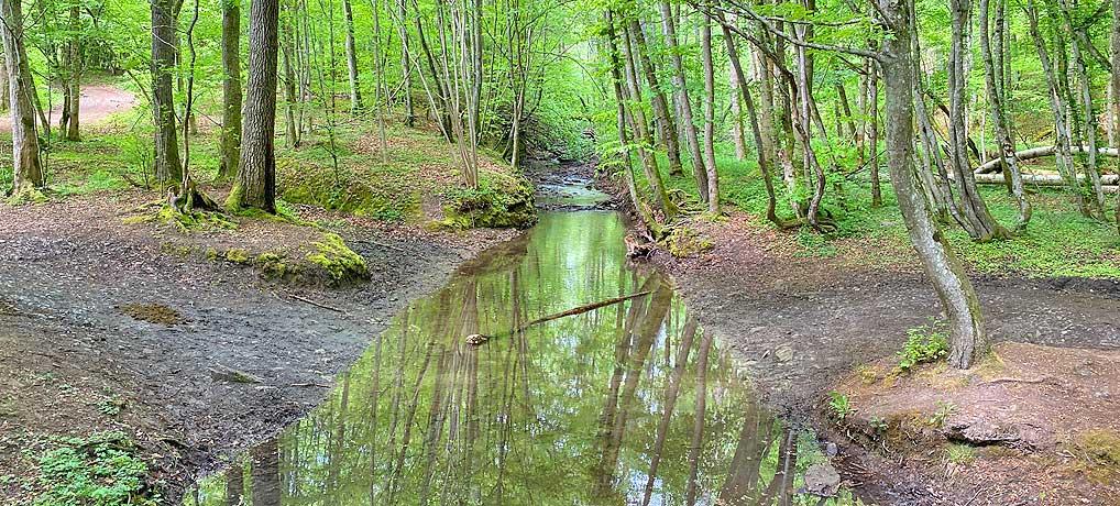 Das Sulzbachtal bei Schönaich im Glemswald ist ein top Ausflugsziel zum wandern