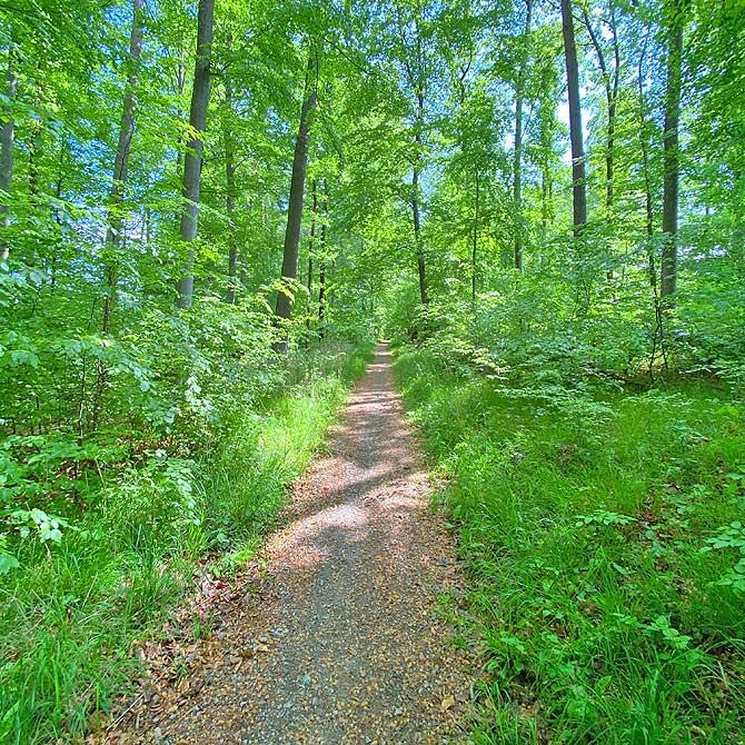 Wandern im Glemswald