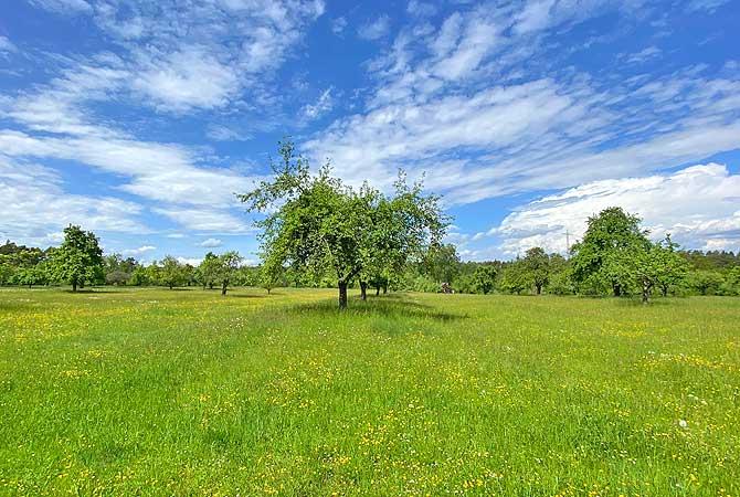 Freie Wiesen und Bäume siehst du selten