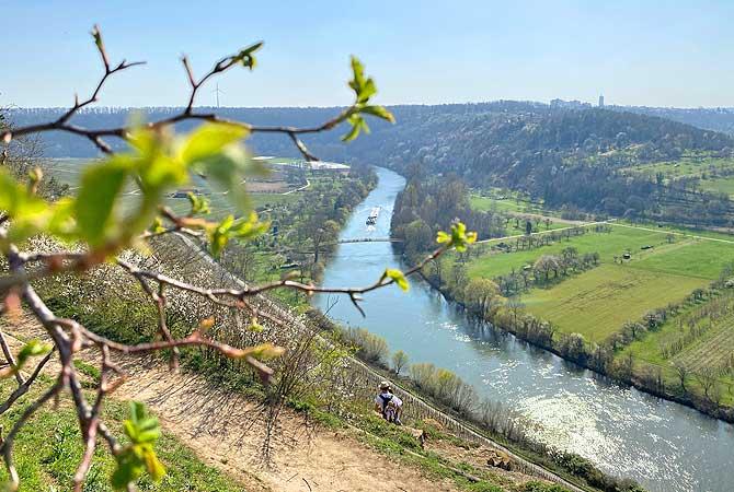 Neckarschleife bei Besigheim
