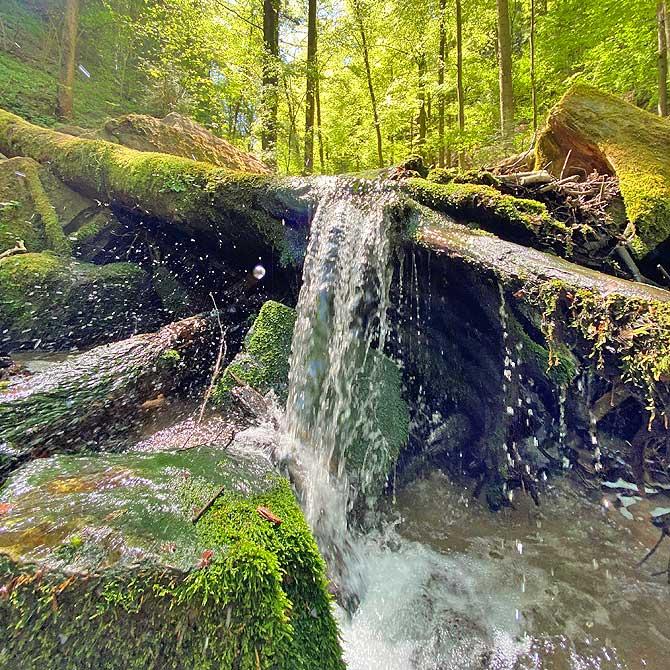 Wilde Wasser Natur