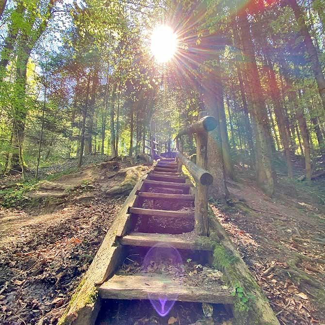 Natur im Schwäbischen Wald