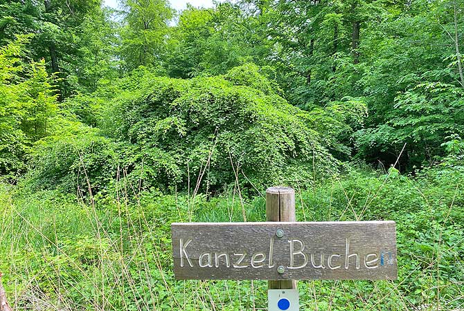 Kanzelbuche im Naturpark Stromberg Heuchelberg