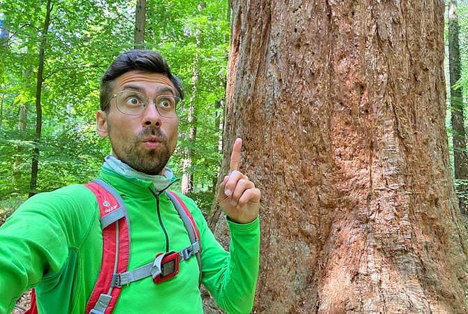 Dein Deutschland Reiseblog vor einem Mammutbaum im Kirbachtal