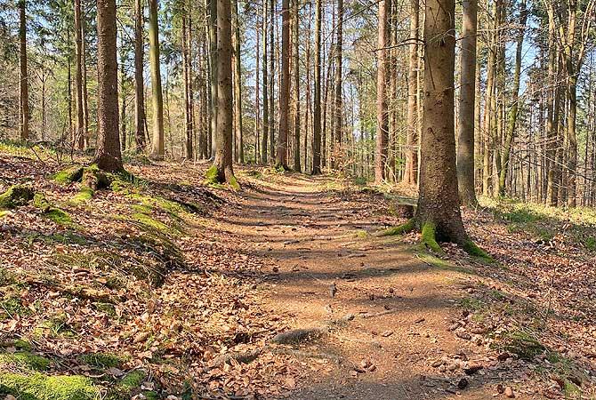 Weg auf dem Neunränklesweg zum Hohberg