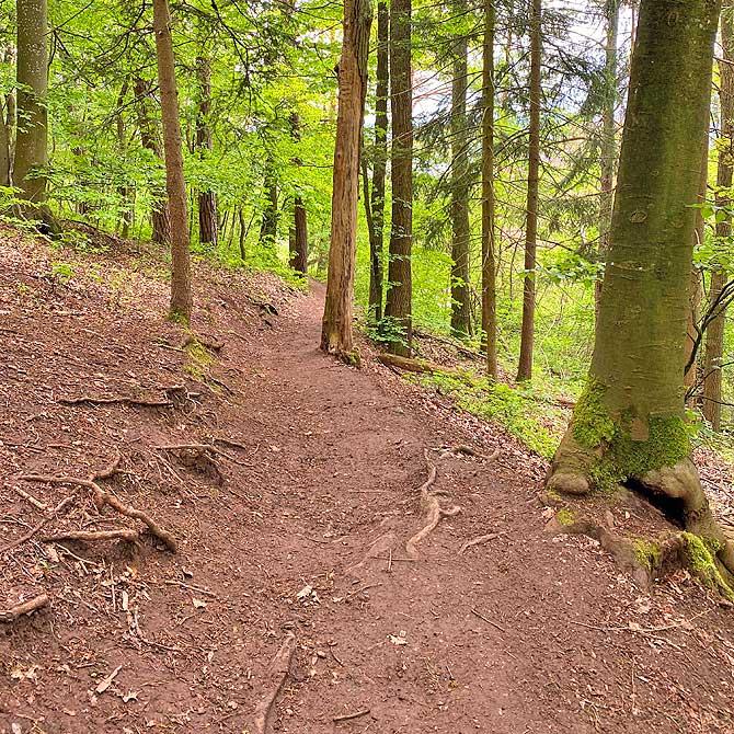 Waldweg bei deiner Wanderung