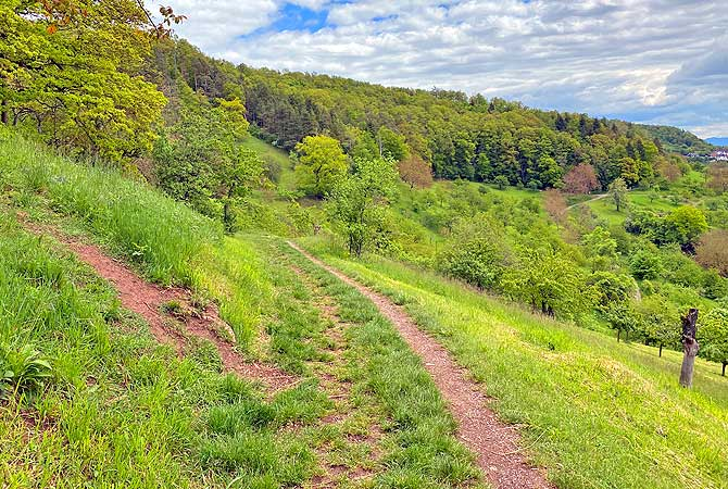 Wandern an der Schönbuch-Kante mit Streuobst Wiesen